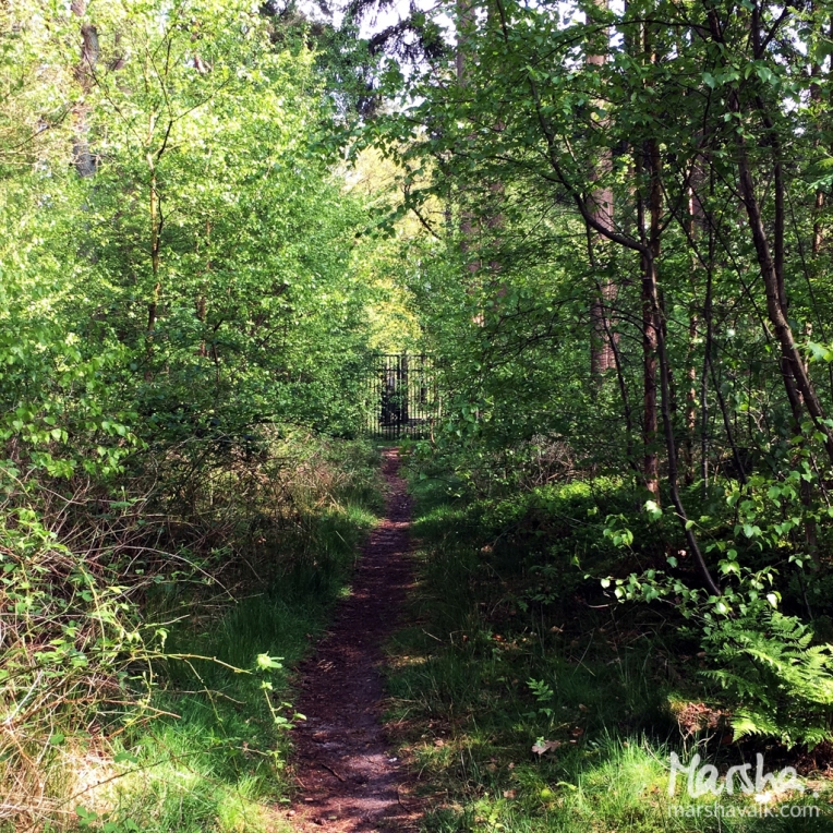 Marsha Valk | Artful Adventures: 3 Fence