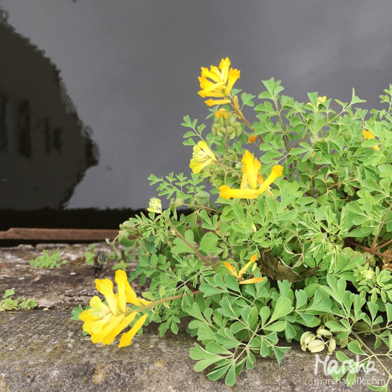 Marsha Valk | Artful Adventures: 9 Plantlife